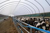 New polytunnel for youngstock in operation Jan 2011